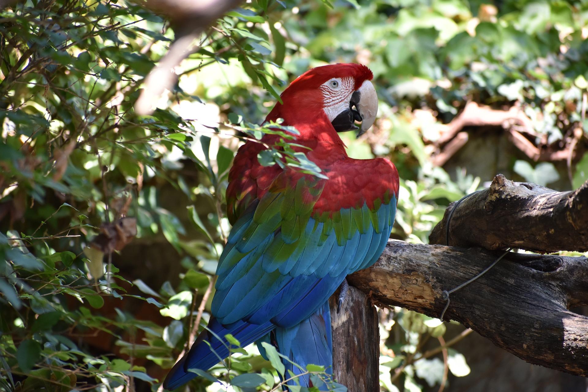 Agriturismo-la-gioconda-Vinci-Firenze-parrots 3601262 1920